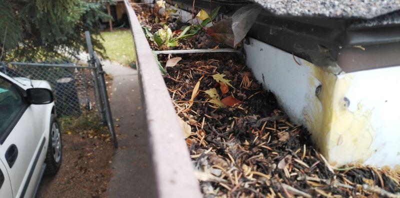 leaves blocking gutter on calgary house
